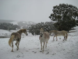 horsesinwinter